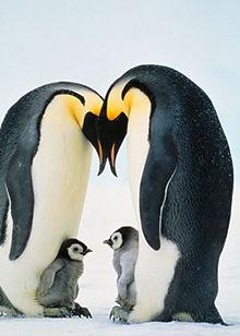 帝企鹅日记:召唤